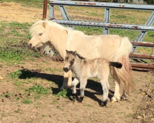 goldie2018filly2daysold.jpg